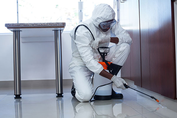 Pest Control in A Warehouse